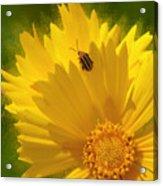 Lady Bug Lookout Acrylic Print