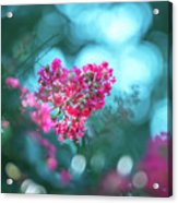 Lagerstroemia Indica Crape Myrtle Crepe Myrtle Acrylic Print