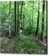 Lakeside Trail Winding Path - Yellowwood Lake Acrylic Print