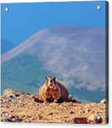 Landscape With Marmot Acrylic Print