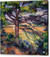 Large Pine And Red Earth Acrylic Print