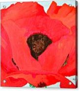 Large Poppy Acrylic Print