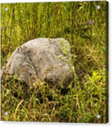 Large Rock And Purple Asters Acrylic Print