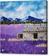 Lavender Farm Acrylic Print