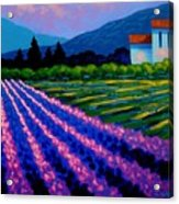 Lavender Field France Acrylic Print