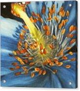 Lazuline Acrylic Print