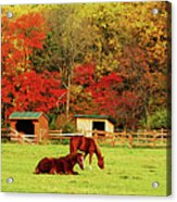 Lazy Autumn Day Acrylic Print