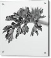 Leaf Acrylic Print by Gabriela Insuratelu