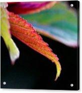 Leaf Study Iv Acrylic Print