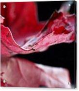 Leaf Study V Acrylic Print