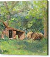 Leftover Hay Acrylic Print