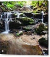 Leura Cascades - Blue Mountains, Australia. Acrylic Print