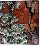 Lichen On Tree Bark Acrylic Print