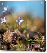 Life Delicate And Strong Acrylic Print