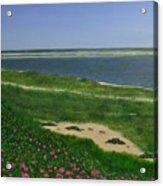 Sea Roses Acrylic Print
