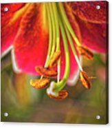 Lily Abstract Acrylic Print