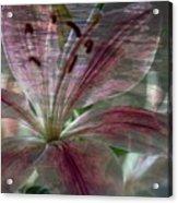 Lily Blossom Acrylic Print