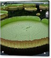 Lily Pads Acrylic Print