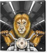Lion On Motorcycle Acrylic Print