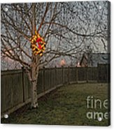 Lit Christmas Wreath Hanging In Tree Acrylic Print