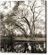 Live Oak Reflections Acrylic Print