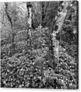 Lone Ranch Wood 4937 Acrylic Print