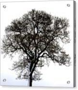Lone Tree In Field Acrylic Print by John Short