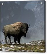 Lonely Bison Acrylic Print by Daniel Eskridge