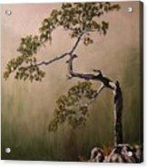 Lonesome Mountain Pine  Acrylic Print