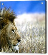 Looking On Acrylic Print