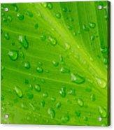 Macro Closeup Of Waterdrops On A Leaf Acrylic Print