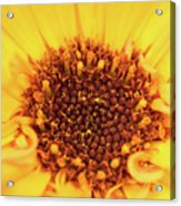 Macro Shot Of A Yellow Flower. Acrylic Print