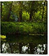 Magic Forest Acrylic Print