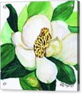Magnolia Iv Acrylic Print