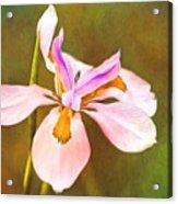 Mama's Iris Acrylic Print