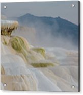 Mammoth Beauty Acrylic Print