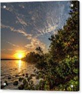 Mangrove Sunrise Acrylic Print