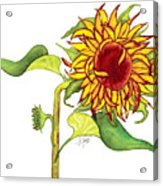Mari's Sunflower Acrylic Print