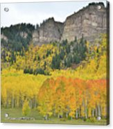Million Dollar Highway Aspens Acrylic Print