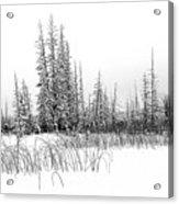 Misty Reeds Acrylic Print