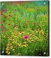 Mixed Wildflowers In Bloom Acrylic Print