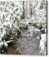 Monongahela National Forest Acrylic Print
