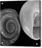 Moon Shells Acrylic Print