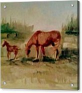 Morning Pasture Acrylic Print