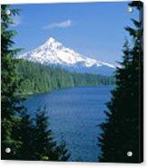 Mt. Hood National Forest Acrylic Print