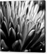 Monochrome Flower Series - Mumz The Word Acrylic Print