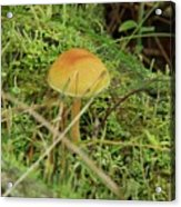 Mushroom And Moss Acrylic Print