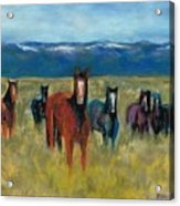 Mustangs In Southern Colorado Acrylic Print