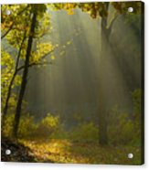 Mystic Morning Acrylic Print