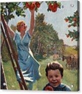 National Apple Week Acrylic Print